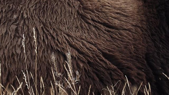 Ein Still aus dem Film «Becoming Animal».