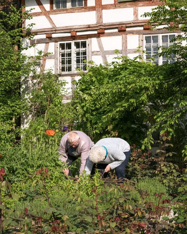 Ein alter Mann und eine alte Frau arbeiten gebückt in einem Garten.