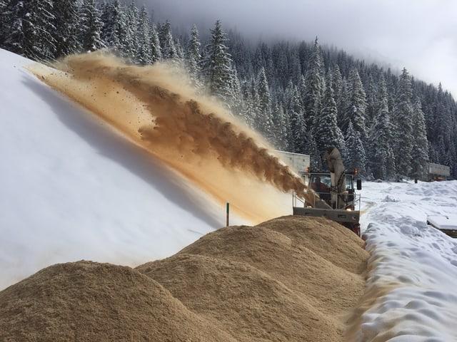 Eine Schneeschleuder schleudert Sägemehl auf einen Schneehaufen.
