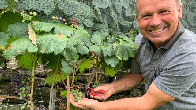 Christian Herzog schneidet die grünen Traubenbeeren in seinem Malbec-Weinberg ab.