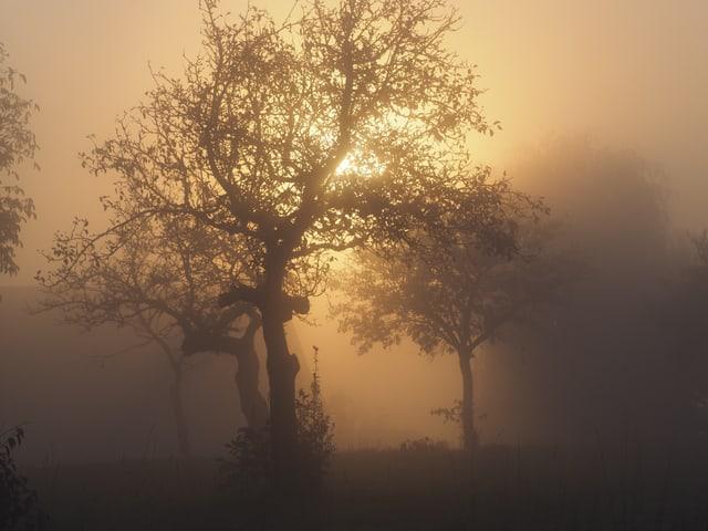 Baum im Nebel mit Sonne.