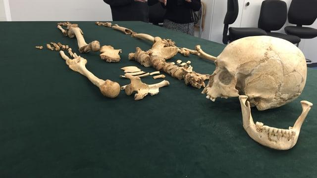 Skelett auf einem Tisch