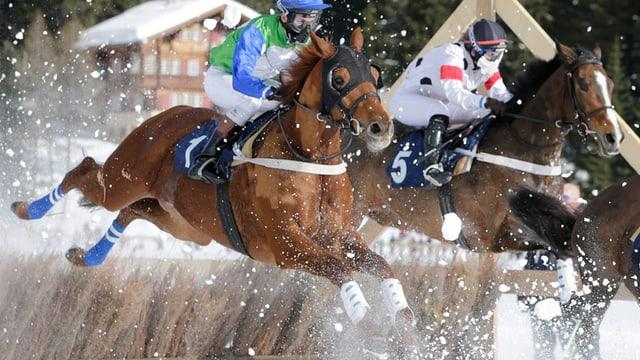 Pferde springen über Hindernis