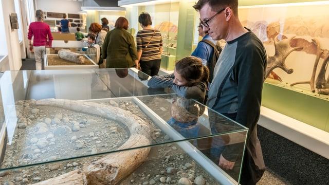 Ein Mann und ein Kind begutachten in einem Glaskasten einen Mammutzahn.
