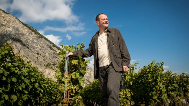 Mann in einem Weinberg, umgeben von Weinstöcken.