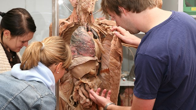 Ein Dozent weist Studentinnen auf bestimmte Teile eines plastinierten Körpers hin.