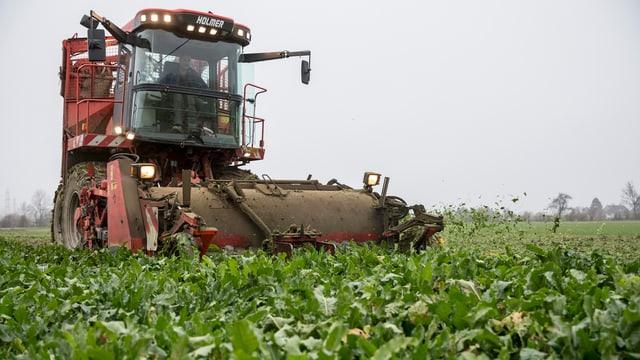 Erntemaschine auf Zuckerrüben-Feld.