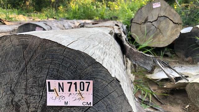 Beschriftete Holzstämme
