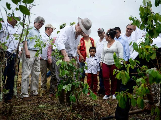 Santos mit Hut umgeben von Leuten reisst eine Staude aus.