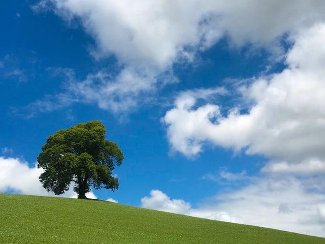 Ein einzelner Baum auf einer grünen Wiese. Im Hintergrund hat es ein paar Quellwolken am sonst blauen Himmel.