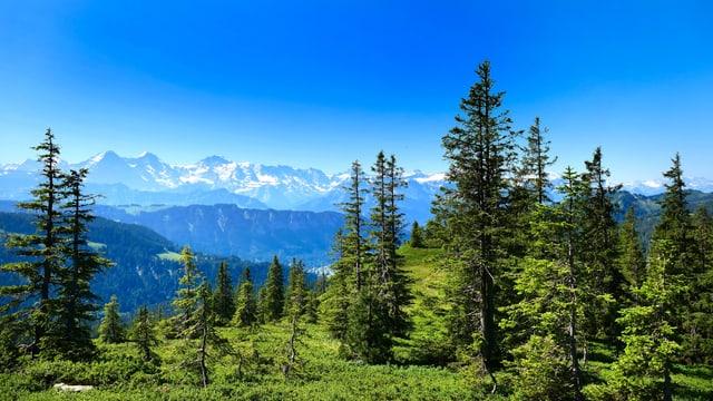 Blick vom Änzigrat auf Eiger, Mönch und Jungfrau.