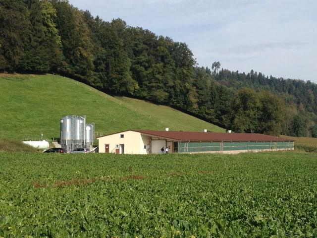 Hühnerstall konventionelle Produktion.