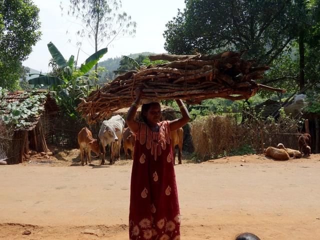 Eine indische Frau trägt ein grosses Bündel Holz auf dem Kopf.