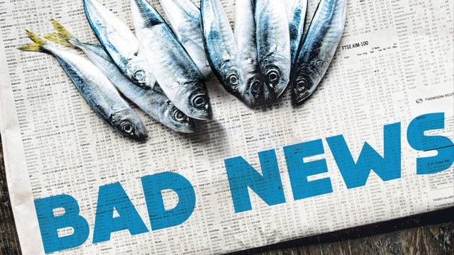 Buchcover: Tote Fische auf einer Zeitung.