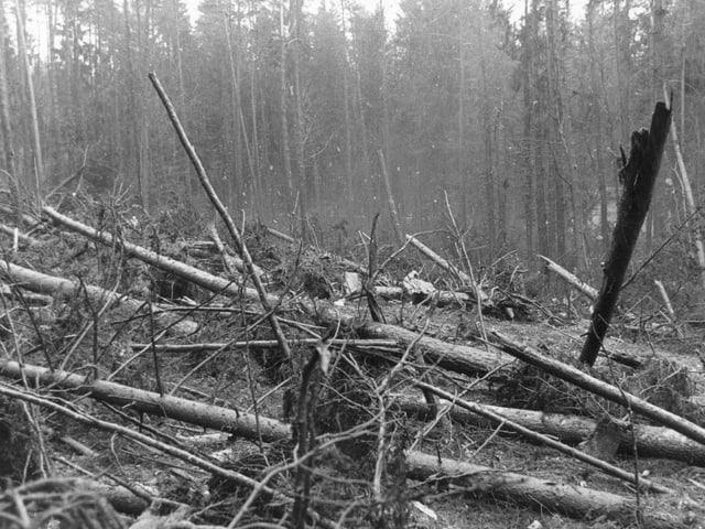 Schwarzweissaufnahme der Absturzschneise im Wald mit zerstörten Bäumen und Trümmerteilen.