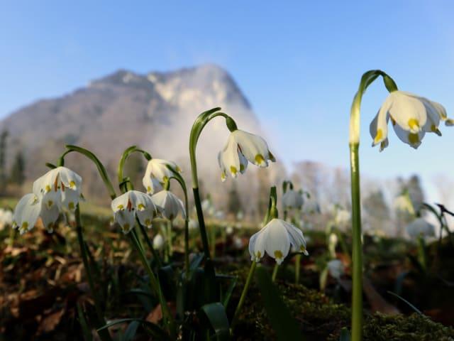 Frühlingsblumen vor den Nebelschwaden
