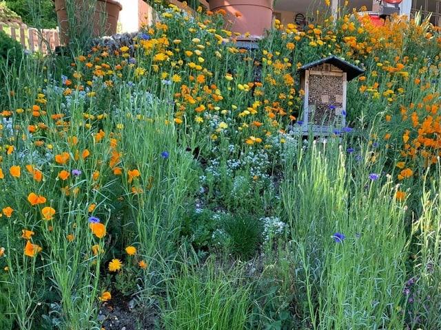 Bienenhotel inmitten einer wuchernden Blütenwiese.