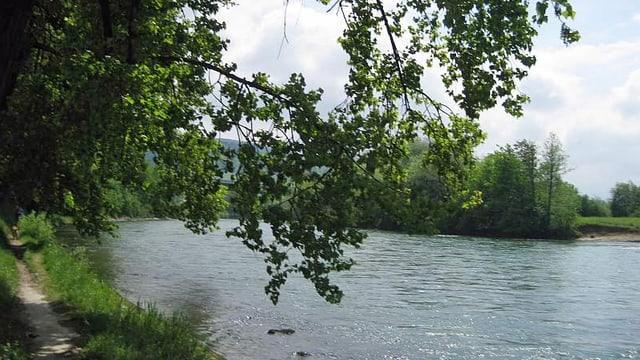 Blick auf das Ufer der Reuss.