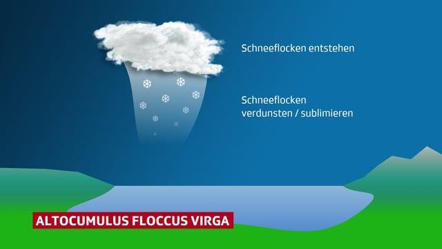 Schematische Darstellung einer Quallenwolke und den dazugehörenden Fallstreifen.