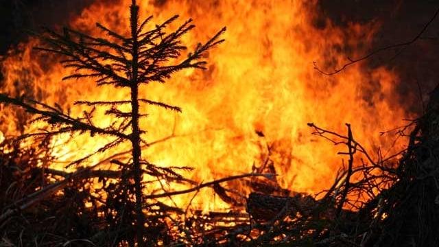 Ein Waldbrand in der Nacht
