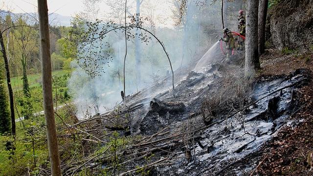 Wiesland in Brand bei Rapperswil-Jona.