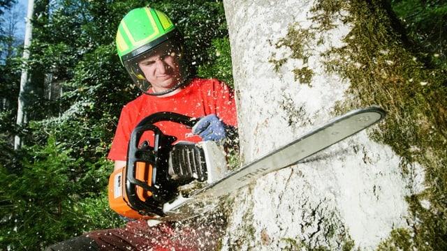 Forstwart Daniel sägt einen Baum an.