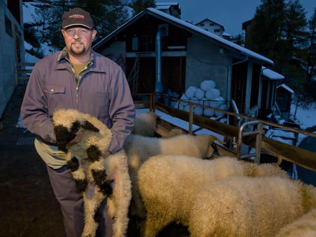 Peter Gottsponer mit Schafen.