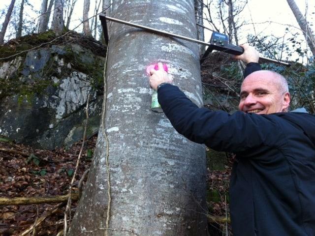 Ueli Amstad zeichnet und misst einen Baum.