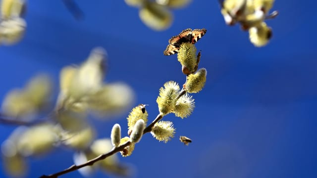 Der Frühling ist auch in Munt Masaun angekommen.