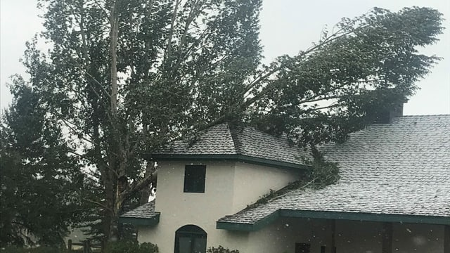 Blick auf Haus. Daneben Bäume, ein Baum liegt auf dem Haus.