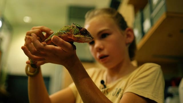 Kinderreporterin Janine bei einem Reporterinneneinsatz im Zoo hat ein Chamäleon auf ihrer Hand
