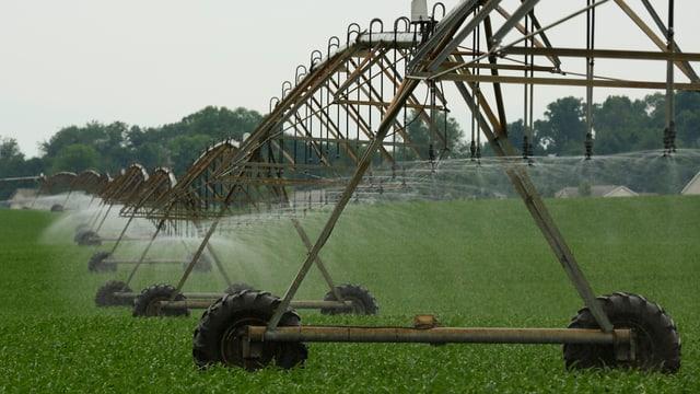 Bewässerungsanlage auf einen Maisfeld.
