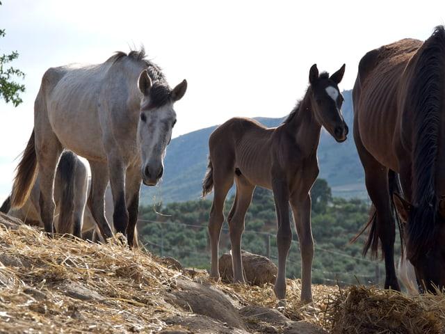 Ein paar Pferde und ein Fohlen stehen beisammen.