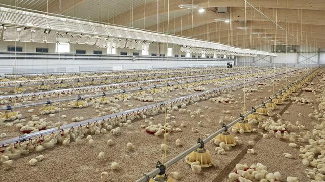 Blick ins Innere des energieneutralen Hühnerstalls von Bell.