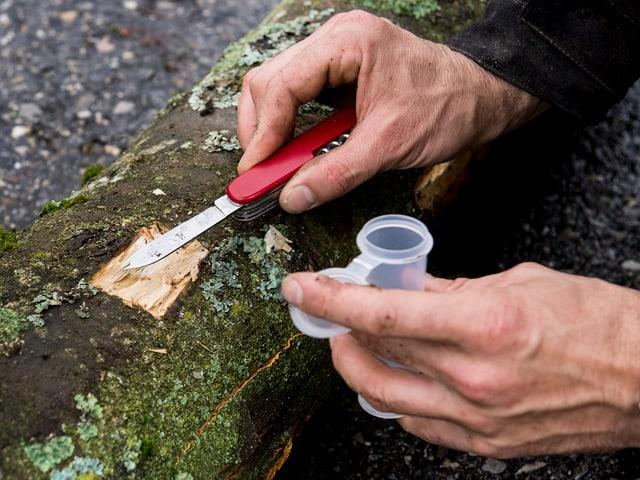 Männerhände bearbeiten einen Baumstamm mit einem Sackmesser