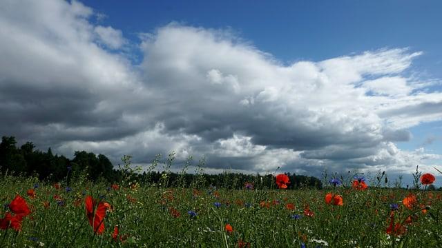 Wolken über Jegenstorf