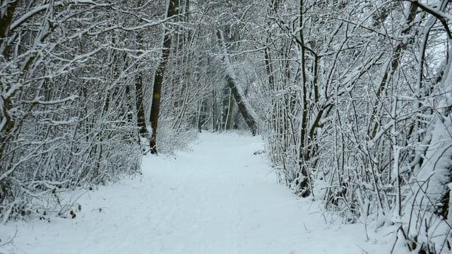 Verschneiter Wald in Erlach.