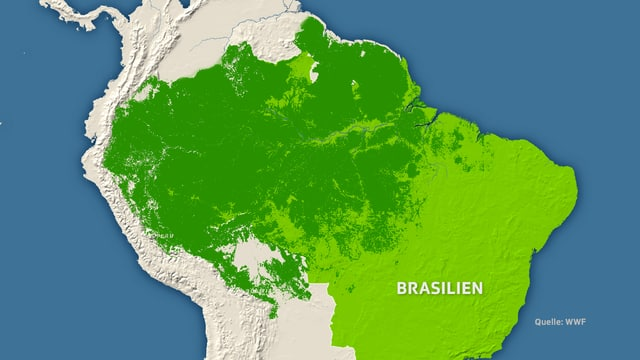 Die Fläche des brasilianischen Regenwalds.
