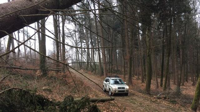 Das Auto des Revierförsters im Wald