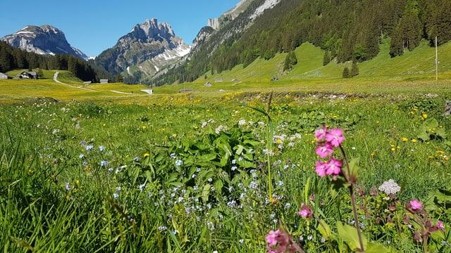 Blumenwiese mit Bergen