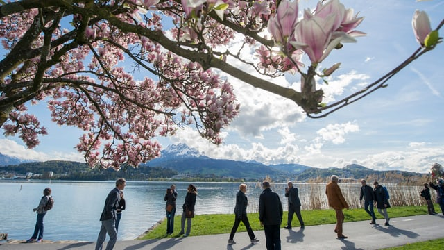 Uferpromenade in Luzern mit Spaziergängern im Frühling