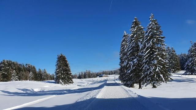 Loipe durch einzelne verschneite Bäume in der Nähe des La Dôle.