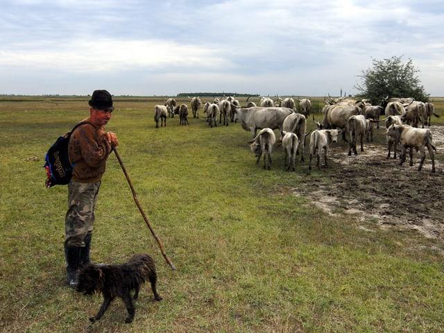 Hirte mit einer Kuhherde