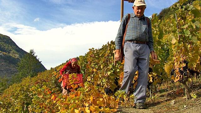 Video ««Unser Dorf» (3): Weintraubenernte, Jagdbeginn und Laufstegstress» abspielen