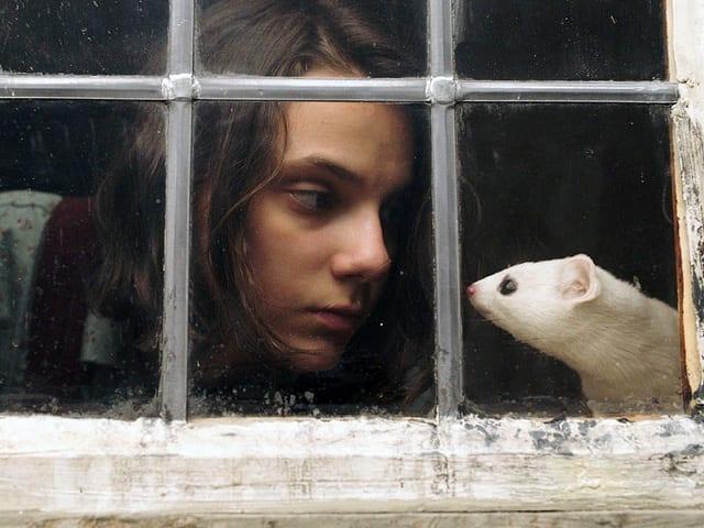 Eine Mädchen guckt ins Gesicht eines Hermelins.