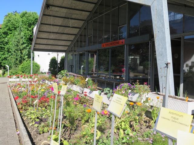 Blumenbeet im Freien
