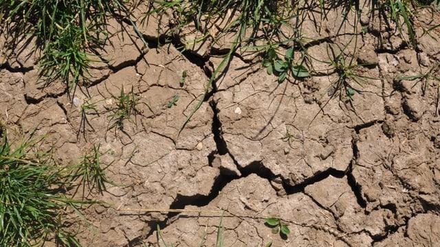 Zu wenig Regen die Erde wir immer trockener, es bilden sich Risse in den Böden