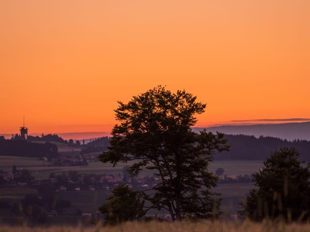 Die Sonne ist bereits unter dem Horizont, der Himmel über der Sommerlandschaft leuchtet rot. Im Vordergund ein Baum, dahinter ein Quartier.