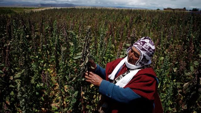 Quinoa-Bauer in Bolivien.
