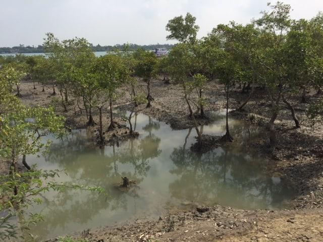 Mangrovenwälder.